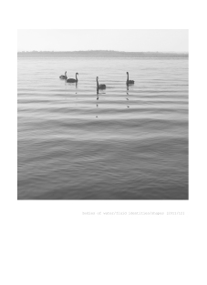 35#Swans