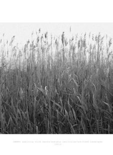 61#reeds