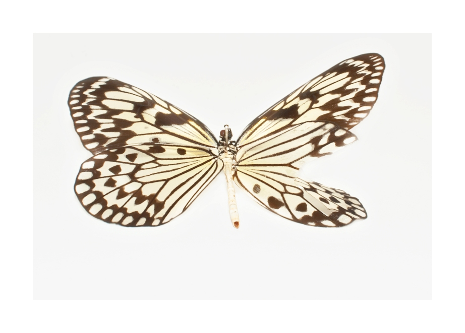 butterfly print2