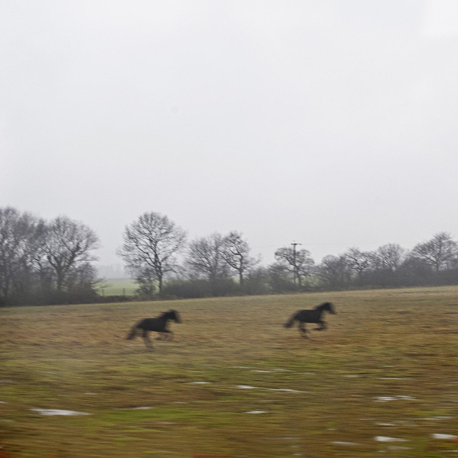 horses-scotlandjpg