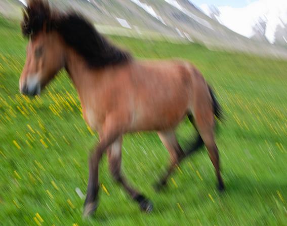 horses#1