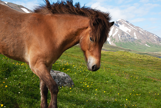 Horses#2