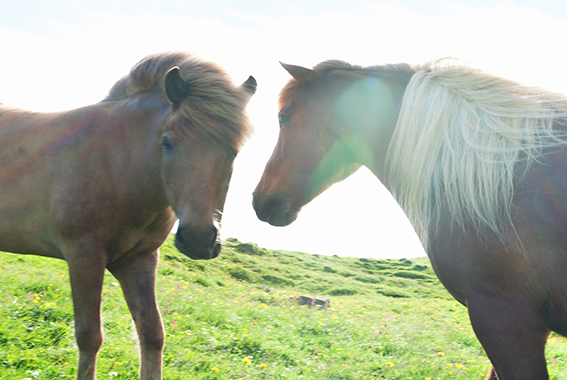 horses#4