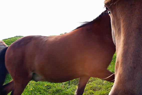 Horses#5