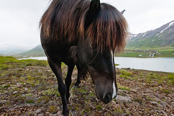 horses#7